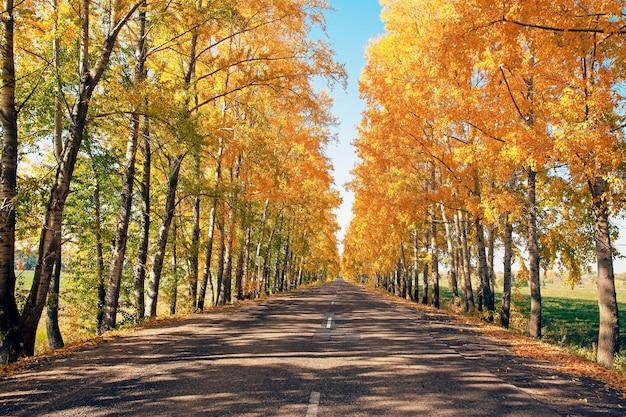Beau paysage de route d'automne, au bord de la route pittoresque forêt d'automne avec feuillage jaune vif et ciel bleu