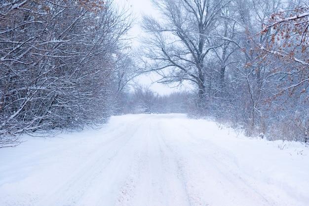 Beau paysage, route enneigée dans la forêt entre les arbres, saison d'hiver