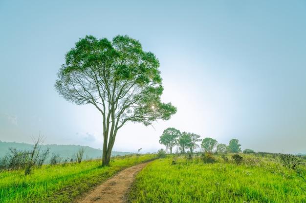 Beau paysage rural de champ d'herbe verte avec une route de campagne poussiéreuse et des arbres sur une colline près de la montagne.