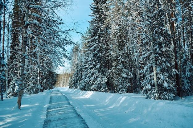 Beau paysage rural d'hiver avec le soleil de la forêt et la neige.