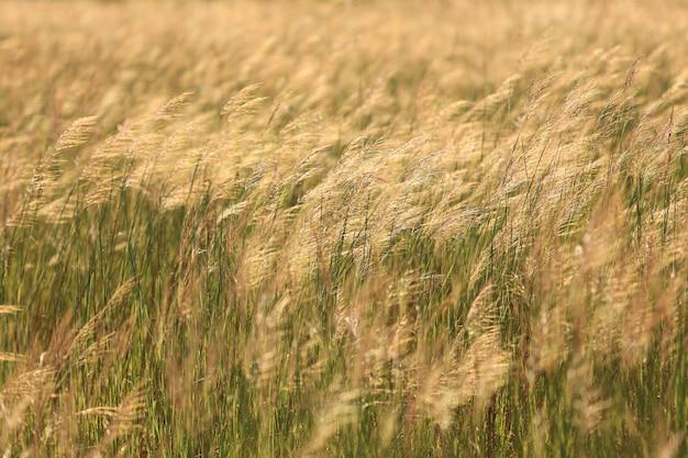 Beau paysage rural avec le lever du soleil sur une prairie