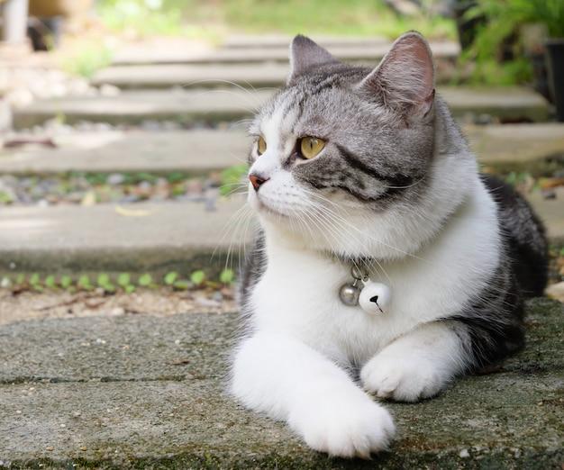 Beau petit chat mignon avec de beaux yeux jaunes dans le jardin extérieur