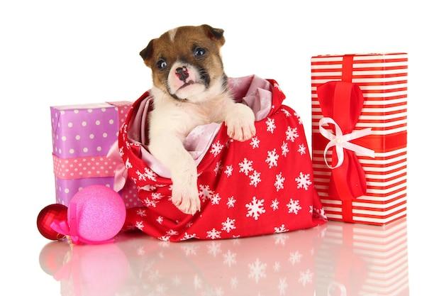 Beau petit chiot dans un sac de nouvel an isolé sur blanc