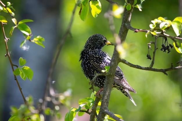 Beau petit oiseau sur une branche d'arbre avec des feuilles vertes petite tour reposant sur un arbre en été