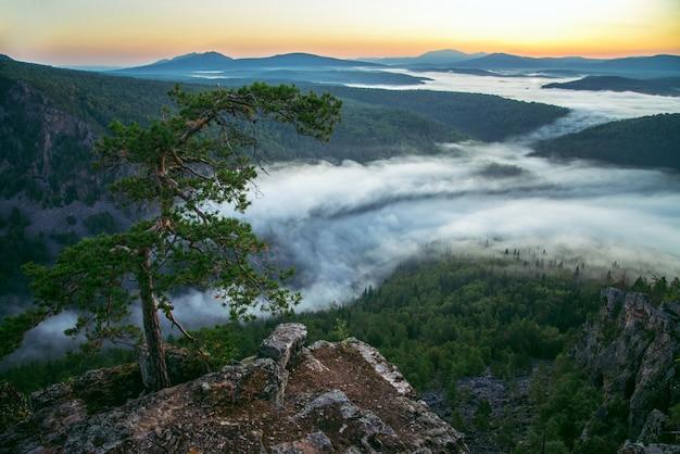 Beau pin solitaire au sommet de la montagne