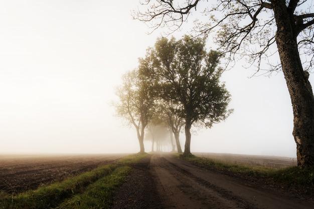 Beau plan d'une route dans une zone rurale avec des arbres