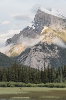 Beau plan vertical de montagnes entouré de pins verts