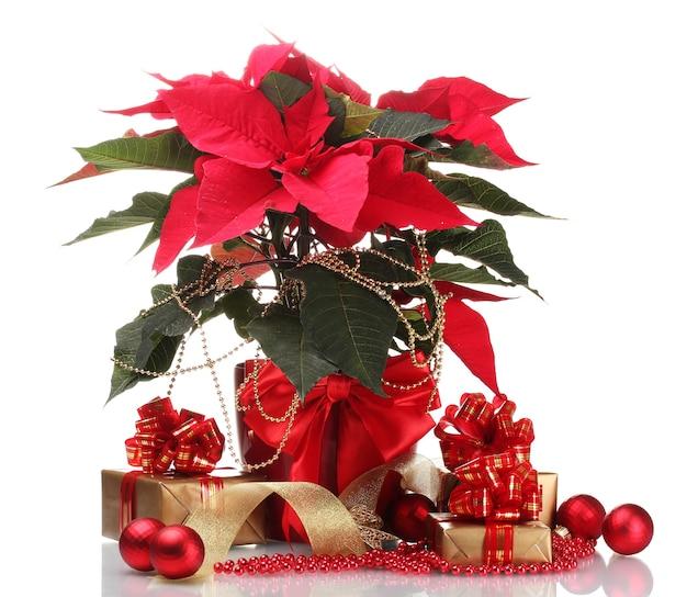Beau poinsettia en pot de fleurs, boules du nouvel an et cadeaux isolés sur une surface blanche