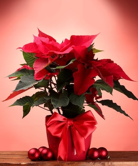 Beau poinsettia en pot de fleurs et boules de noël sur table en bois sur fond rouge