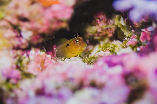 Beau poisson en sous-marin