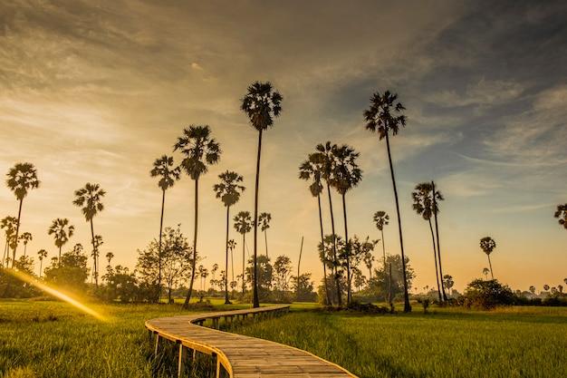 Beau pont de bambou en bois parmi les palmiers tropicaux au coucher du soleil