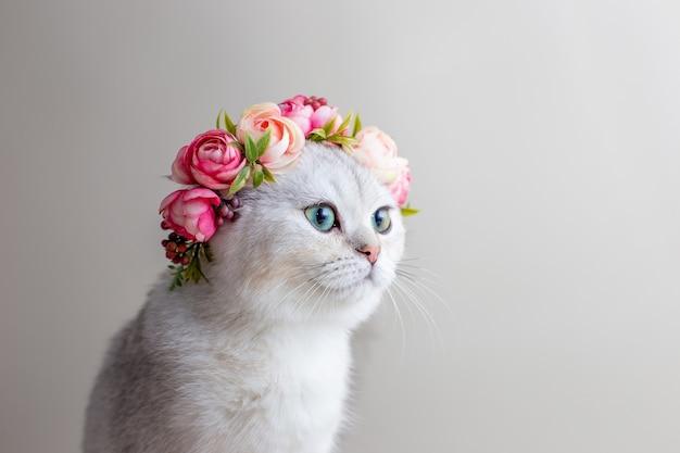 Beau portrait d'un charmant chat blanc portant une couronne de fleurs roses sur fond gris