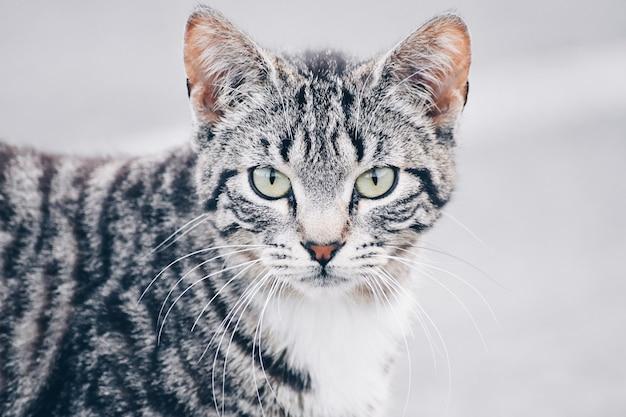 Beau portrait d'un chat dans la rue. site gratuit pour le texte