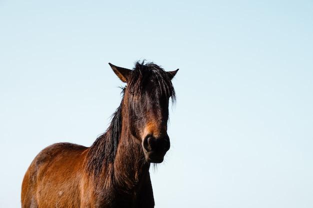 Beau portrait de cheval brun dans le pré