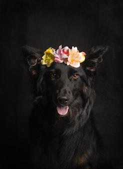 Beau portrait de collier noir avec bandeau fleur sur fond noir en studio