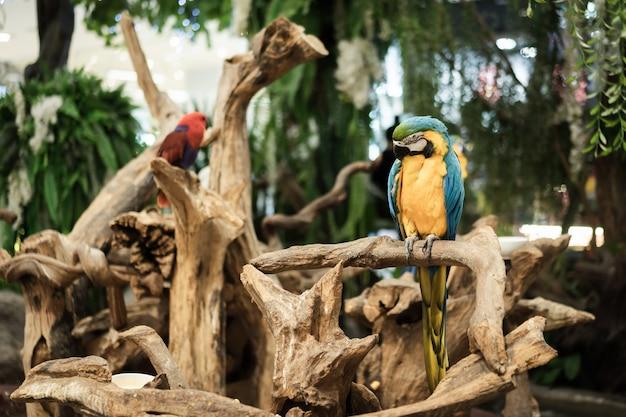 Beau portrait de perroquet ara, oiseau dans le jardin.