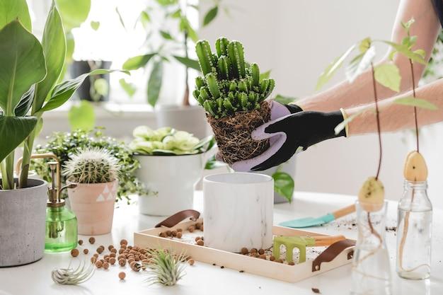 Beau processus de jardinage domestique jeune femme prend soin des plantes vertes dans des pots en céramique élégants sur la table en bois blanc les plantes aiment le concept de jardin domestique intérieur avec beaucoup de plantes