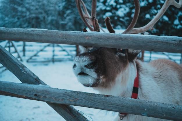 Beau renne dans le parc ethnique nomad