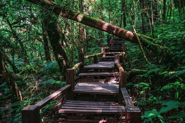Beau sentier de la jungle de la forêt tropicale, sentier de la nature ang ka luang