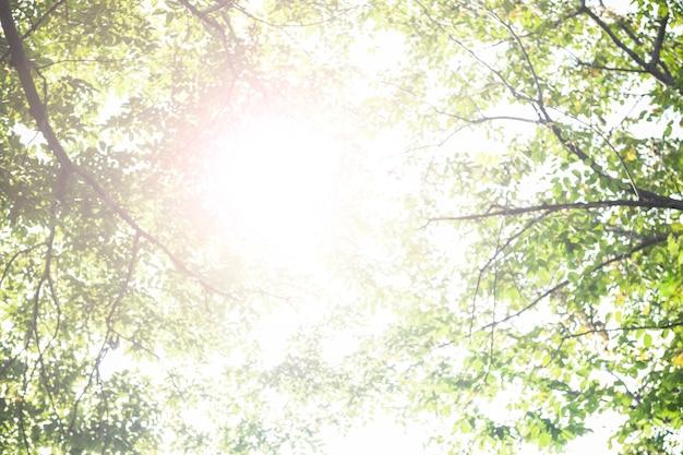 Beau soleil qui brille à travers la photographie de la nature des arbres