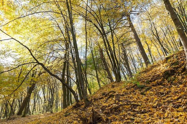 Beau temps d'automne dans le parc, feuillage d'automne. temps d'automne réel