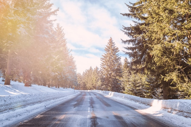 Beau temps hivernal et route en forêt