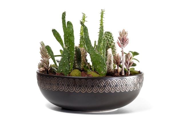 Beau terrarium succulent