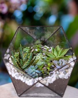 Beau terrarium avec succulentes, cactus, fleurs, roches, sable à l'intérieur du verre