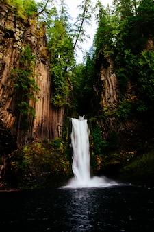 Beau tir d'une cascade dans la forêt entourée de grands arbres
