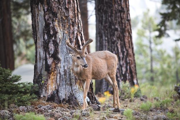 Beau tir d'un cerf brun dans la forêt