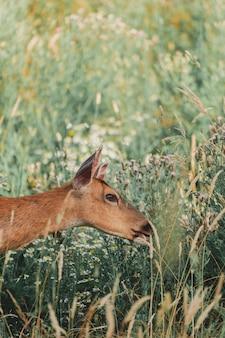 Beau tir d'un cerf enduit brun sauvage sur une colline verte dans une forêt