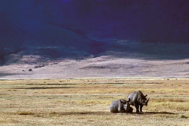 Beau tir de deux rhinocéros sur un champ herbeux sec avec des montagnes au loin