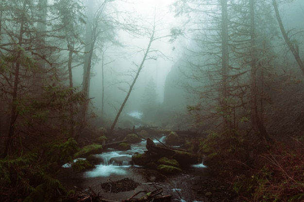 Beau tir d'un lac dans une forêt dans un terrain rocheux