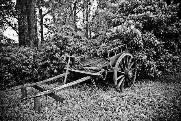 Beau tir d'un vieux chariot de cheval cassé près des arbres en noir et blanc