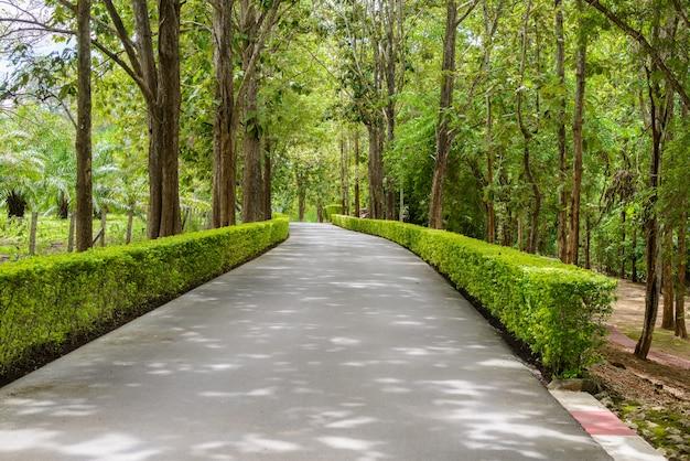 Beau tunnel d'arbre