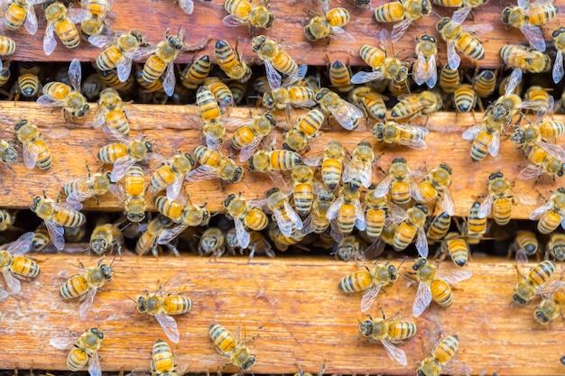 Beaucoup d'abeilles sur fond de nid d'abeille
