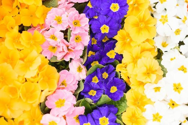Beaucoup de belles fleurs colorées dans une serre
