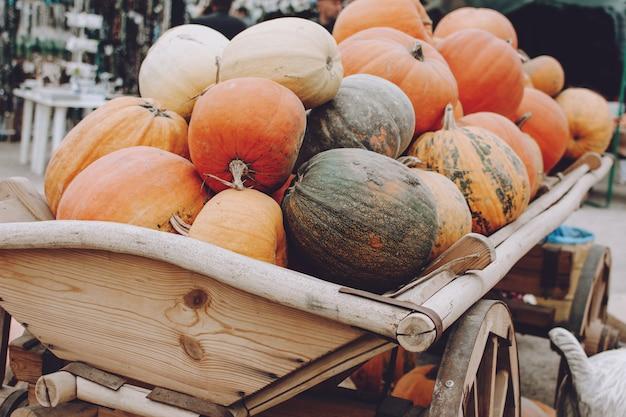 Beaucoup de citrouilles dans un chariot en bois. diverses citrouilles