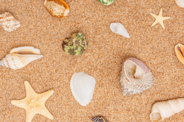 Beaucoup de coquillages différents sur le fond de sable de la plage