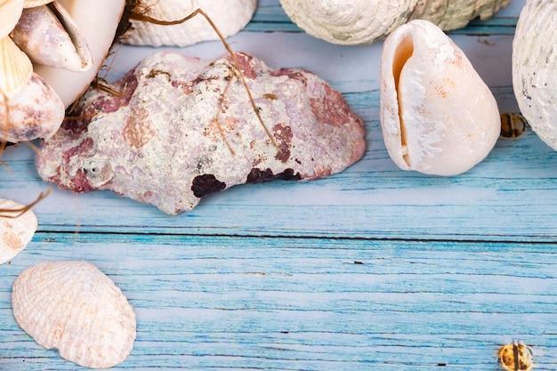 Beaucoup de coquillages sur un fond en bois bleu. thème marin.