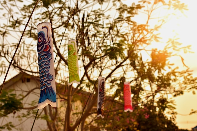 Beaucoup de drapeau de poissons koi sont accrochés sur le devant de la maison. dans la soirée