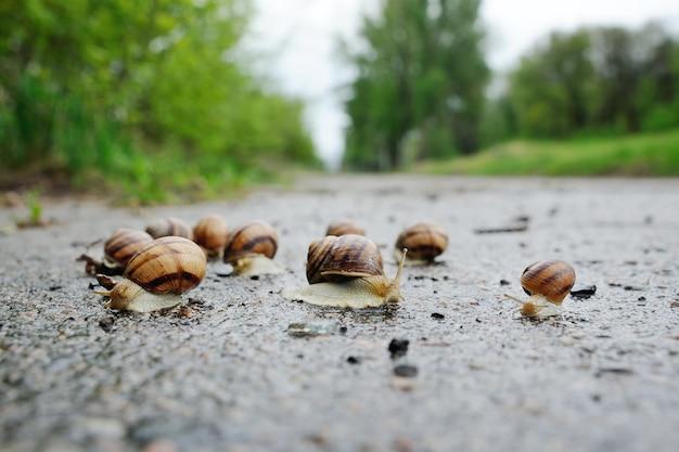 Beaucoup d'escargots après la pluie sur l'asphalte sur un fond de