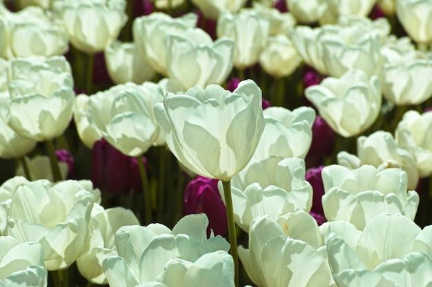 Beaucoup de fleurs blanches