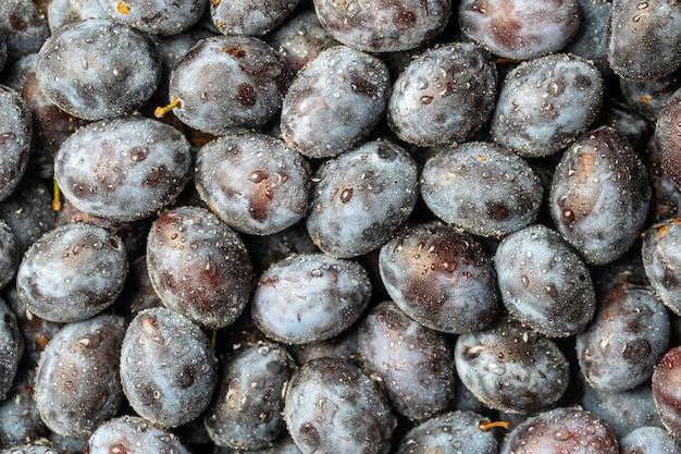 Beaucoup de fruits de prunes bleues fraîches avec des gouttes d'eau