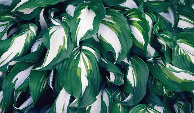 Beaucoup de grandes feuilles vertes.