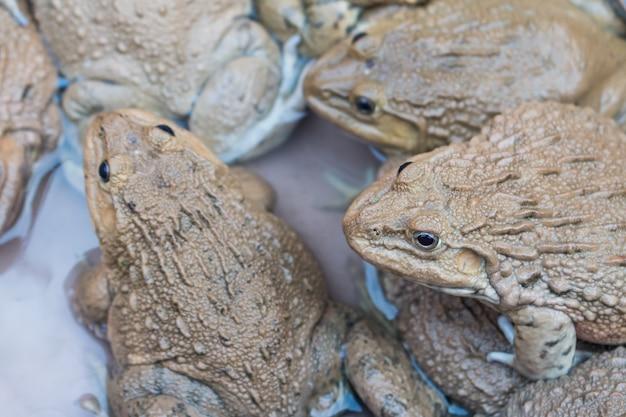 Beaucoup de grenouilles sur le marché