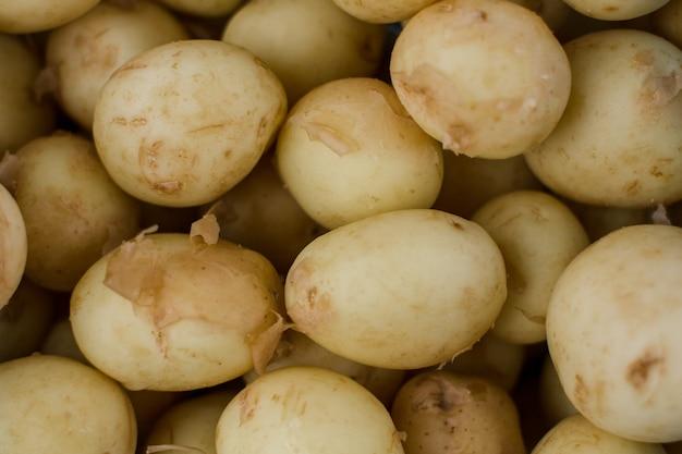 Beaucoup de jeunes agraires de fond de pommes de terre