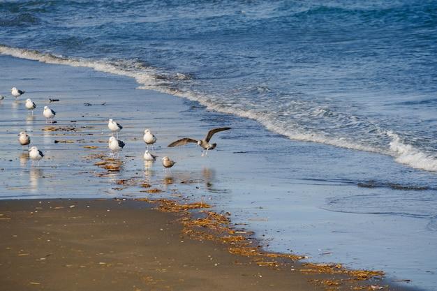 Beaucoup, mouette, sur, plage, enoshima, île