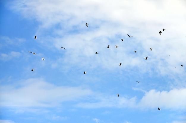 Beaucoup de mouettes blanches volent dans le ciel bleu nuageux