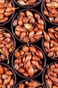 Beaucoup d'oignons ou d'échalotes dans des bols côte à côte. vue de dessus.